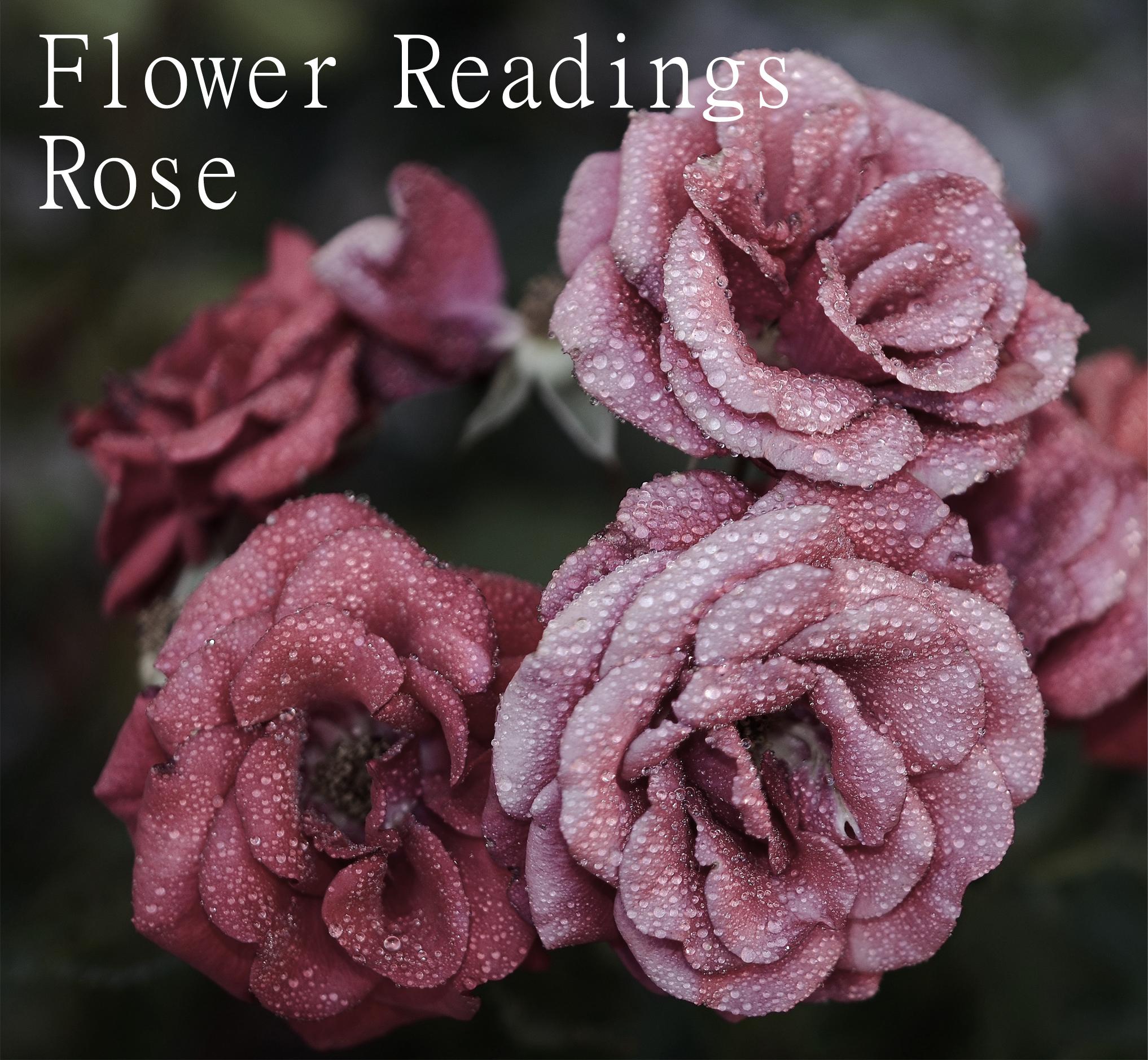 Flower Readings - Blog - Nirvana Light